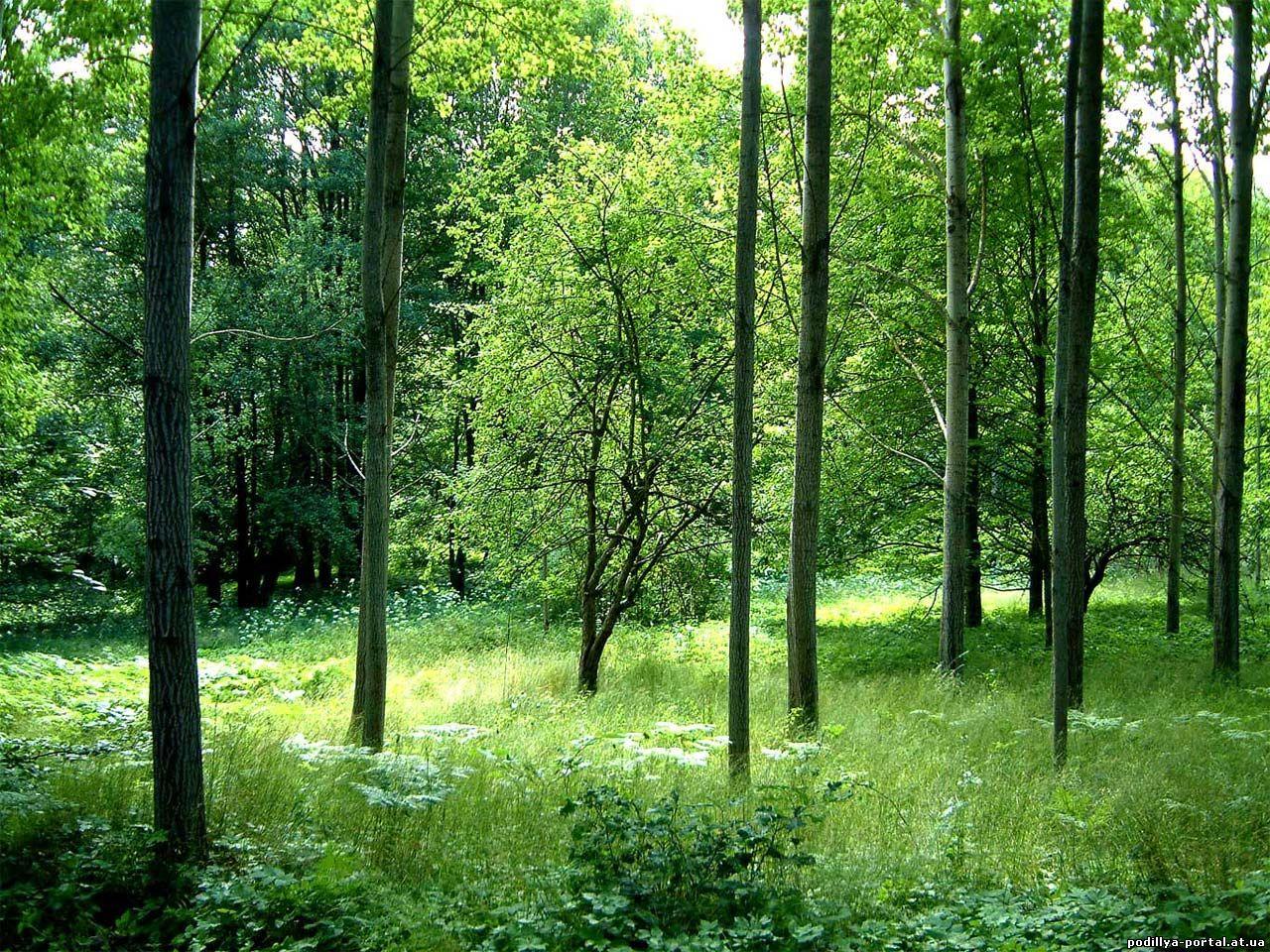 Картинки сказочный лес скачать обои